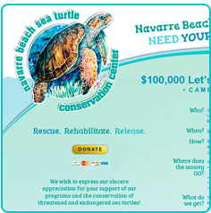 Navarre Beach Sea Turtle Conservation, Navarre Beach FL - Marketing